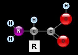 Aminoacido: estrutura geral