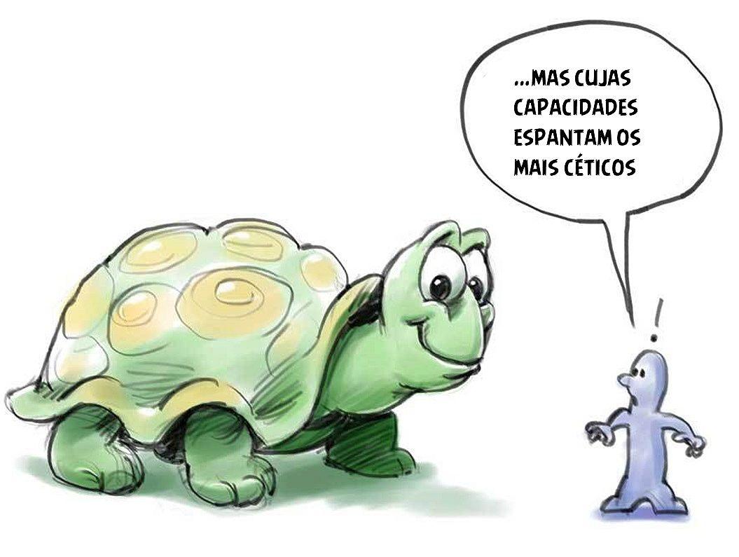 tartaruga-2